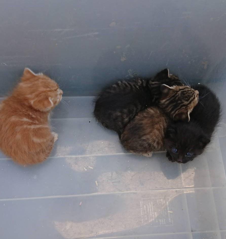 昨晩🏪コンビニのバイト中🐈猫ちゃん達の写真を送ってきた息子📷常連さんのお客様宅で猫の赤ちゃんが4匹生まれたと🐈一匹🐈飼ってくれないかと🏡つい最近🐈ゴロちゃんが野良猫ちゃんと判明し🐈お世話中🥺🐈爽笑ちゃんも両目の調子が悪く😢飼ってあげたい😢でも😢🐕🐩