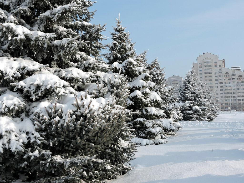 Белгород картинки зимой