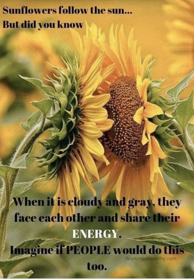 """""""Sunflowers follow the sun but did u know that when it is cloudy & grey, they face each other & share their energy. Imagine if people would do this too."""" Join me in this affirmation: Today I will be like a sunflower & share my good energy with others! #StarfishClub #mentalhealth<br>http://pic.twitter.com/hvVTosH6uu"""