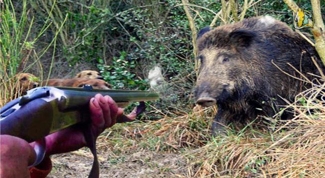 Più morti e feriti per la caccia che per i cinghiali. Eppure alcuni @SenatoriPD @MinoTaricco @caterinabiti e altri chiedono con emendamentino a Legge di Bilancio più caccia http://bit.ly/34TCHhw @nzingaretti @SergioCosta_min battete un colpo? (non di fucile)