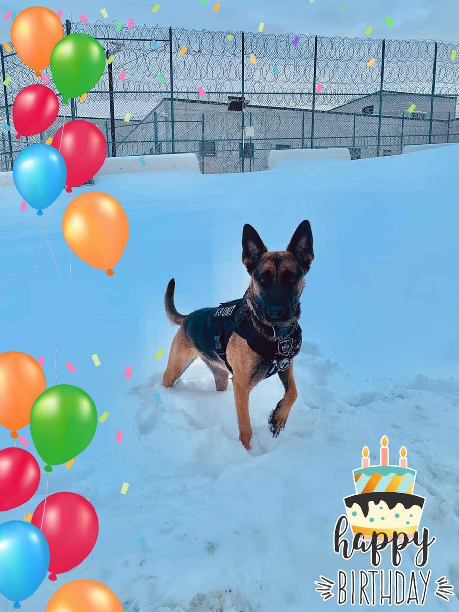 Guess who turned 2 yesterday?K9 Oakley!!  #K9Oakley #K9Unit #NHDOCProud #HappyBirthdaypic.twitter.com/cT3J5LAXnF