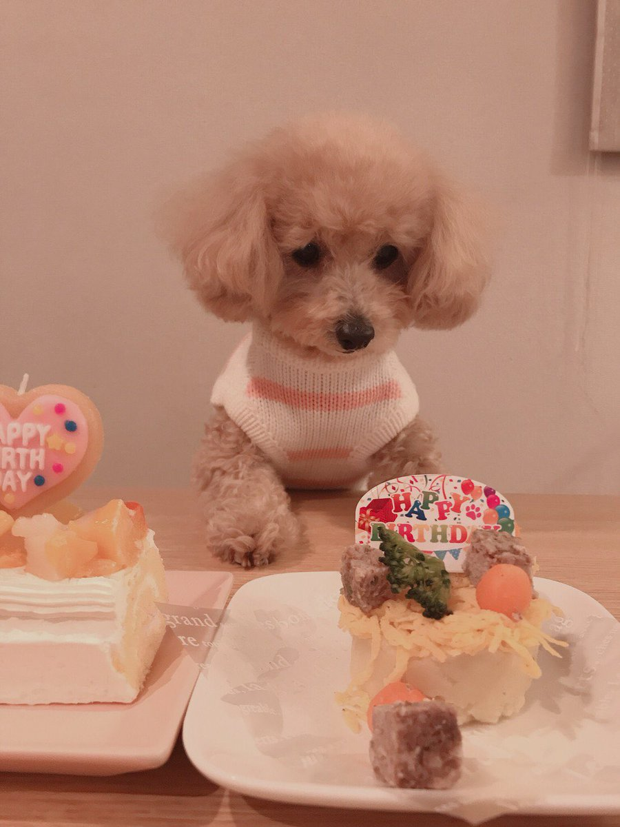 じゃ〜ん!今日12月5日は私の愛犬『クララ🐶』のお誕生日なの🎂🎉クララ〜💕生まれてきてくれてありがとう🥰出会ってくれてありがとう🥰💕お家に来てくれてありがとうね〜🥰💕💕残念ながら一緒にお祝いは出来なかったけれどある方法で参加したよっ🤗🎶それはまたあとで…🎂🐶🎉