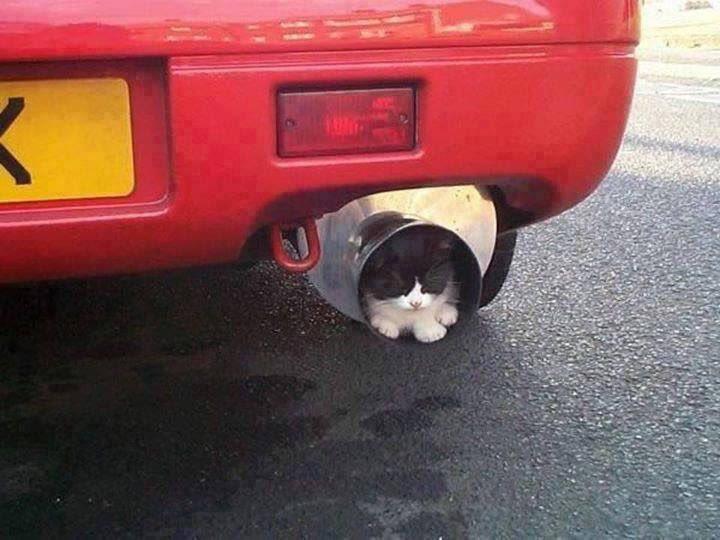 猫「おまえ、もしかしてまだ、ネコがエンジンルームにしか入らないとでも思ってるんじゃないかね?」