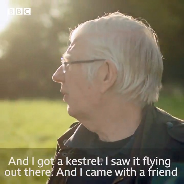 This beautiful moment when @gdavies takes the real-life inspiration for Billy in Kes to fly a kestrel for the first time in 50 years...