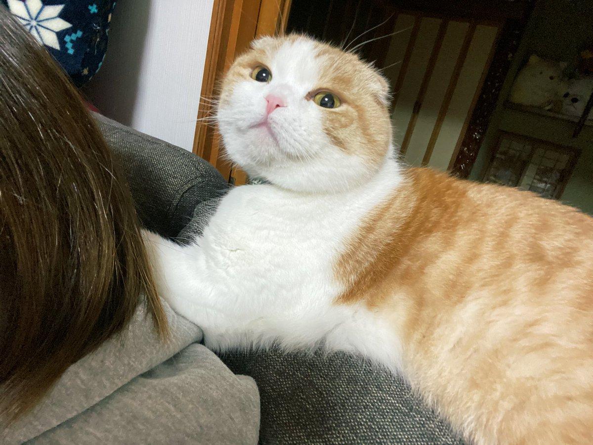 ソファに座ってるとたまに髪の毛を毛ずくろいされるんだけど、その場面を撮ろうとしたらなぜかドヤ顔されたり、何もしてませんみたいな顔されてなかなか撮れません。