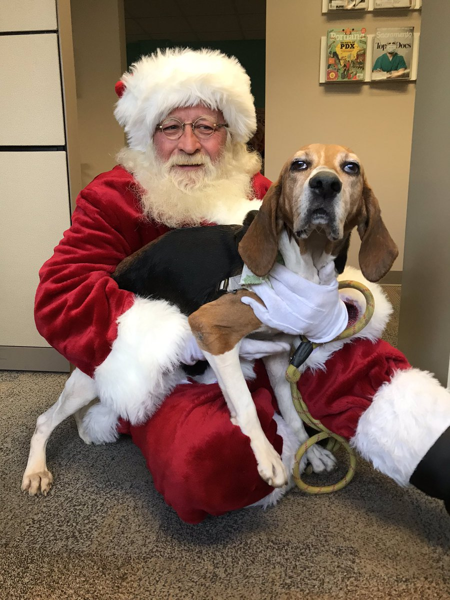 Meet IPA, the sweetest 5-year-old hound mix from Dane County Humane Society! She's Santa-approved and would make a great pet this holiday season🎅