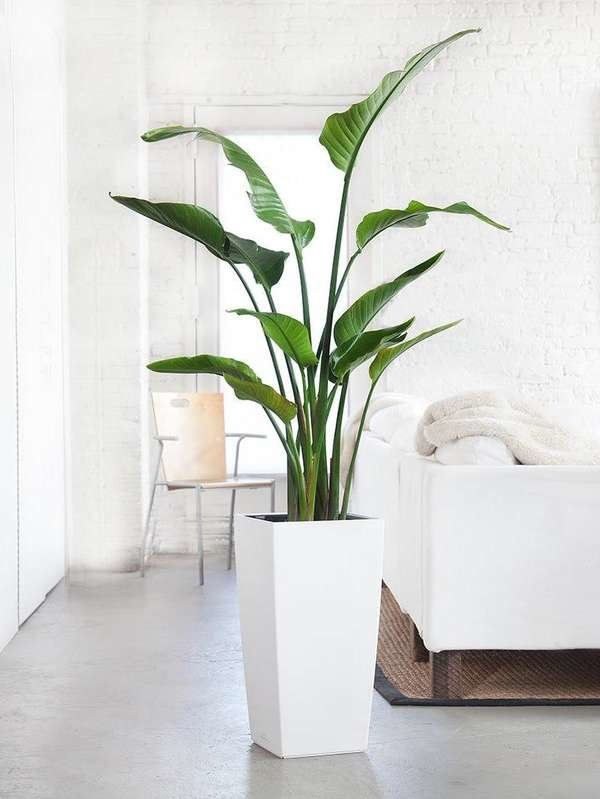 This #houseplant is known as bird of paradise. Would it look good in your home? #lifestyle    #svrrealtyllc