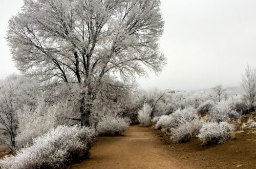 Added to the portfolio: The Frozen Park #Colorado • • • • #photography #motivation #desire #happiness #inspire #instagood #beautiful #instacool #instalike #livingthedream #travel #travelgram #instago #passportready #wanderlust #ilovetravel #instapassport #winter