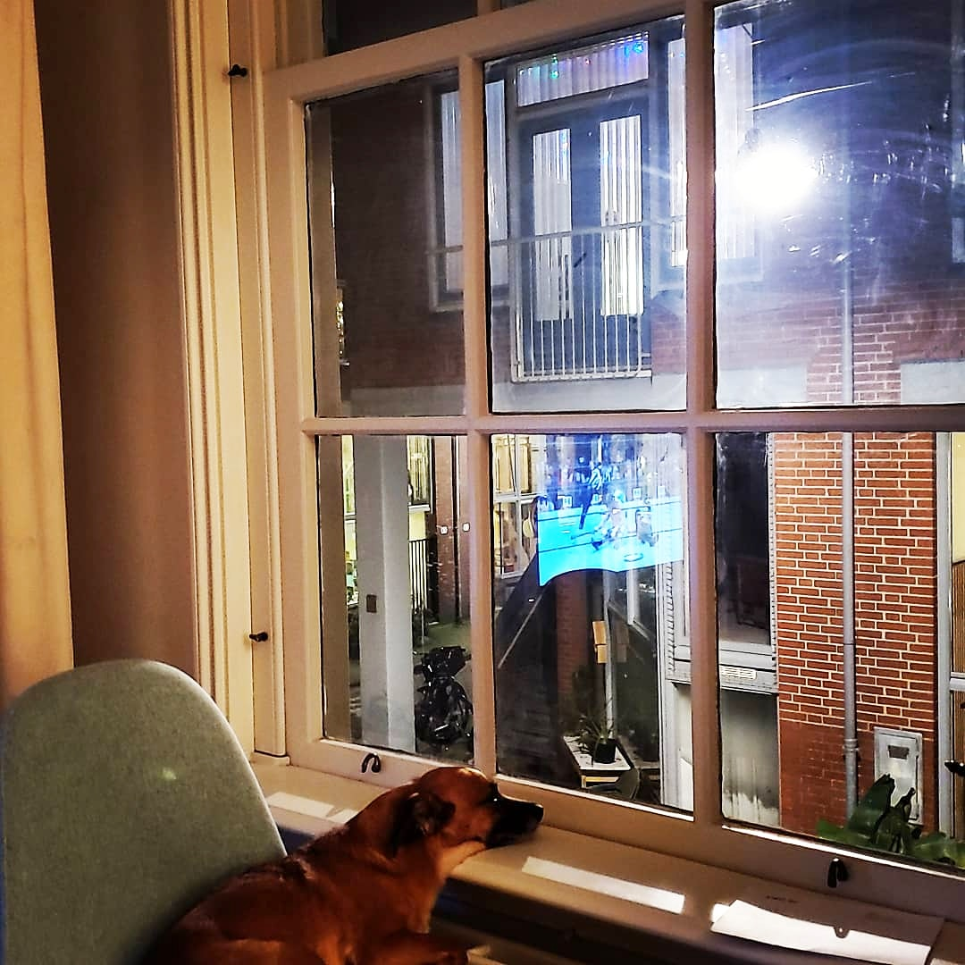 New views from our new apartment ❤ Find out more about the move at   #amsterdam #amsterdam🇳🇱 #travel #travelers #travelphotography #travelblogger #travelbloggers #traveling #jackrussel #pupper #dogstagram #dog #cute #cuteanimals #cutedogs #cutepuppy