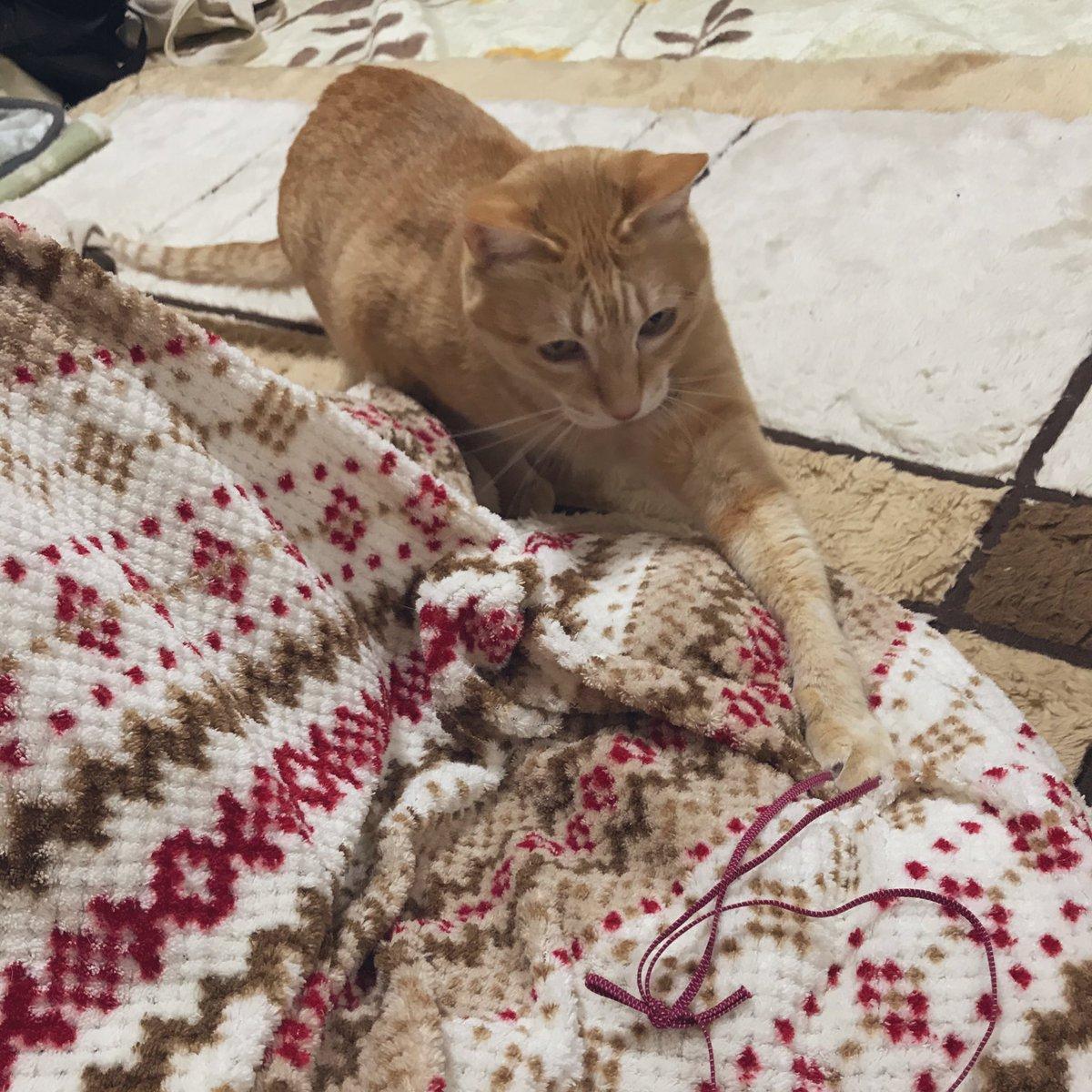 見て見ぬふりはできないお母様からのLINE!熱中症の猫を助けたら扶養家族がまた増えた!