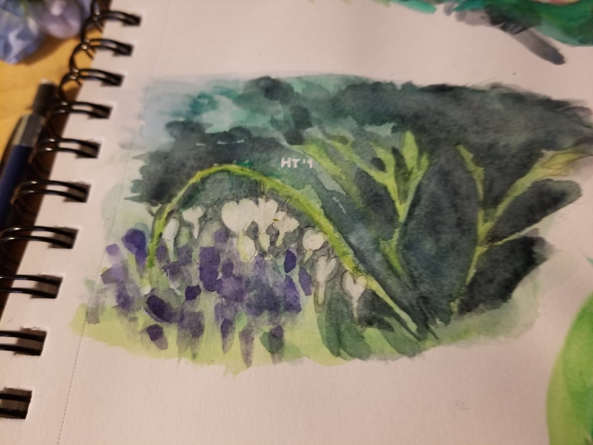 White bleeding hearts and grape hyacinth photo study. #ArtistOnTwitter #watercolor #traditionalart #painting #Flowers