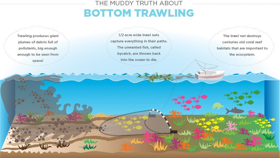 """""""Up to 86 % of the Greater North Sea and Celtic Seas' seabeds have been physically disturbed by bottom trawling, of which 58 % is highly disturbed"""" according to the new report from @EUEnvironment   We have to ditch this wasteful and destructive way to catch fish."""