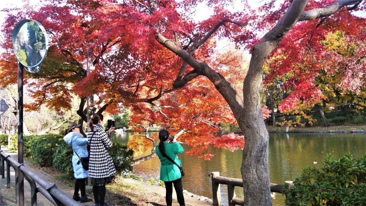 shakujiji on Twitter: おはようございます、 石神井公園池畔風景 紅葉も一段と・・狙いは皆さん同じ場所 #写真好きな人と繋がりたい  #photo…