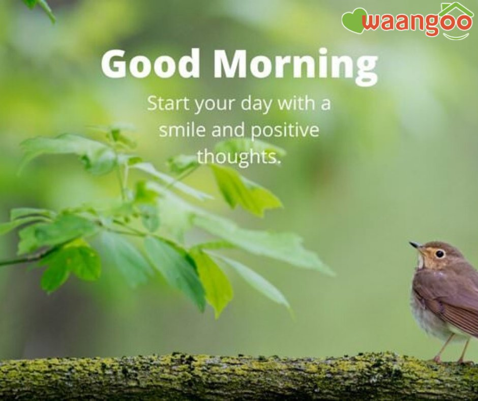Good Morning  What are your Positive thoughts and Smiles about this Morning?  #WaangooMorning #Positivevibes #FridayMorning #FreshMorning #Goodthoughtspic.twitter.com/abJ3aJY4Bd