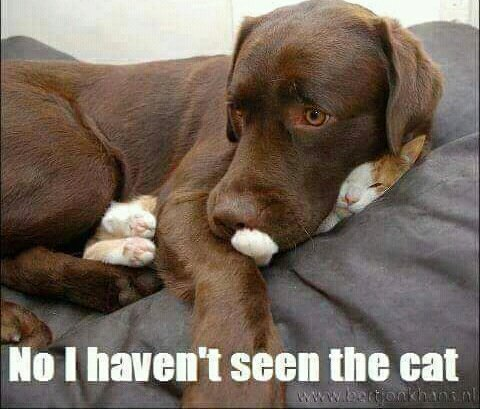 Replying to @ChampneyLisa: #WeirdGiftsForYourPets A cat for your dog. 😁
