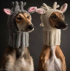 Replying to @Sckswithsandals: A new hat  #WeirdGiftsForYourPets
