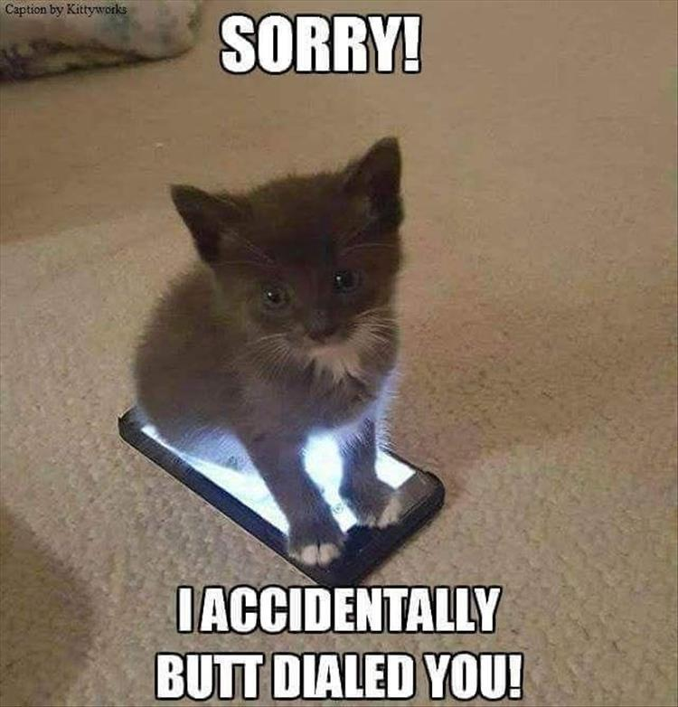 Replying to @MrBradyiscrazy: #WeirdGiftsForYourPets   cell phone