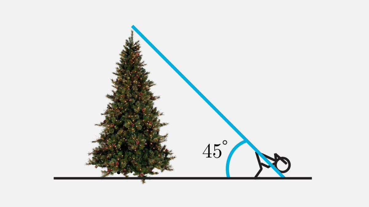 How to tell how tall a tree is 1) At a distance,bend and look back through your legs 2) Adjust distance until you can barely see the top 3) Height is your distance from the tree ⚠️ Assuming we look through our legs at 45° - accuracy might depend on the observers flexibility!