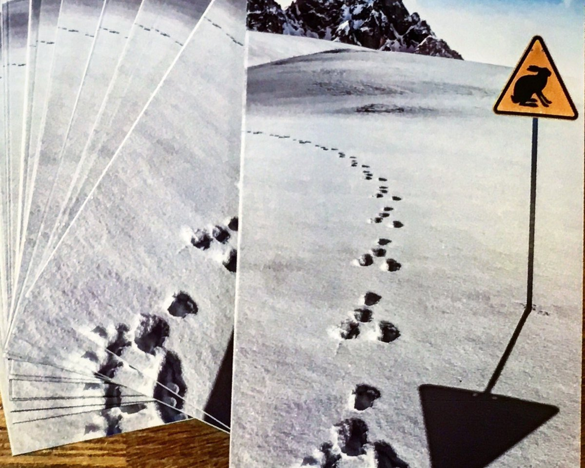 This week  Sending Christmas Cards to half of our National #OpGalileo Key Offenders  Politely reminding them that 2020 will be a tough year for Hare Coursers...  We will target their other offending as a result of them drawing attention to themselves in our fields  . <br>http://pic.twitter.com/TazupkmSfN