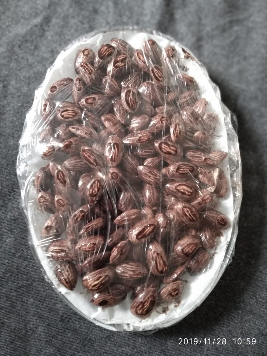 Dry fruits Chocolate coated Almonds