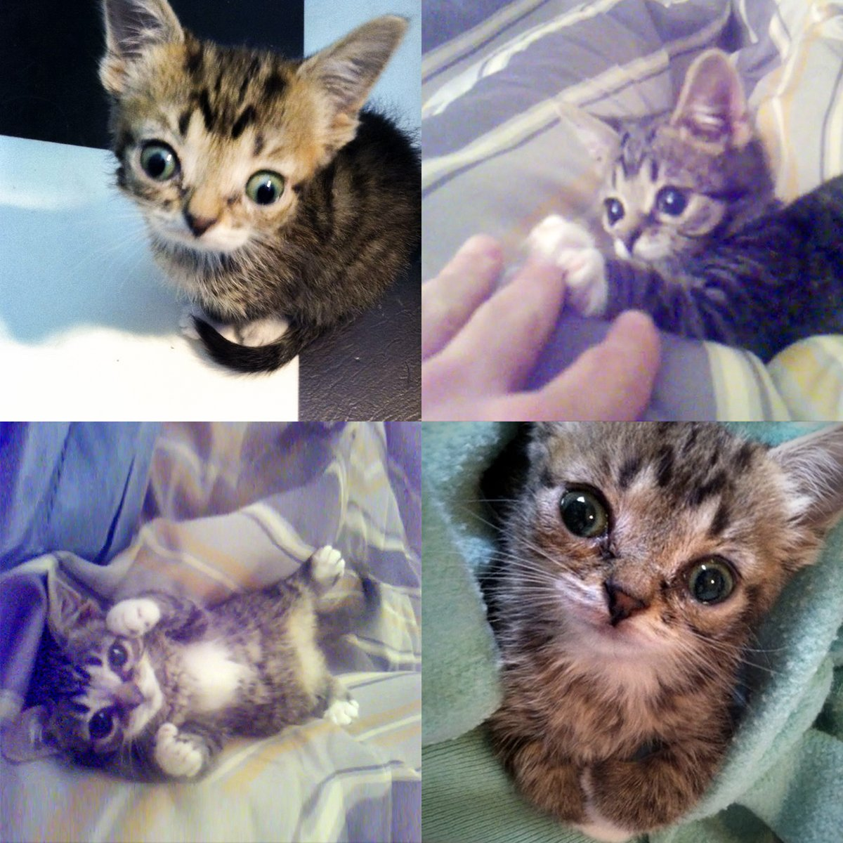 Fridays were always about BABY BUB, so lets celebrate with these amazing Lil Lil BUB photos. #lillilbub #bestjobbub #bubforever