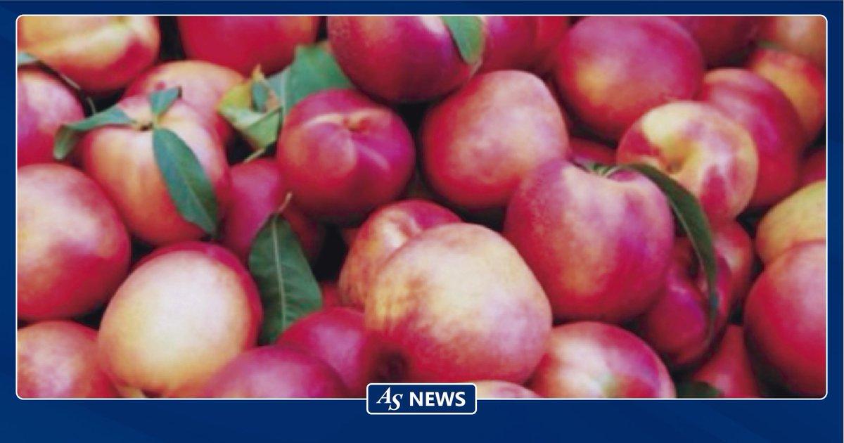 Exportaciones chilenas de duraznos y nectarines podrían superar las 97 mil toneladas en la temporada 2019 - 2020 https://buff.ly/38gMMaG  #AsiaShipping #LatinAmericaSpecialist #LogisticaInternacional #ComercioExteriorpic.twitter.com/I5UvdZwg2O