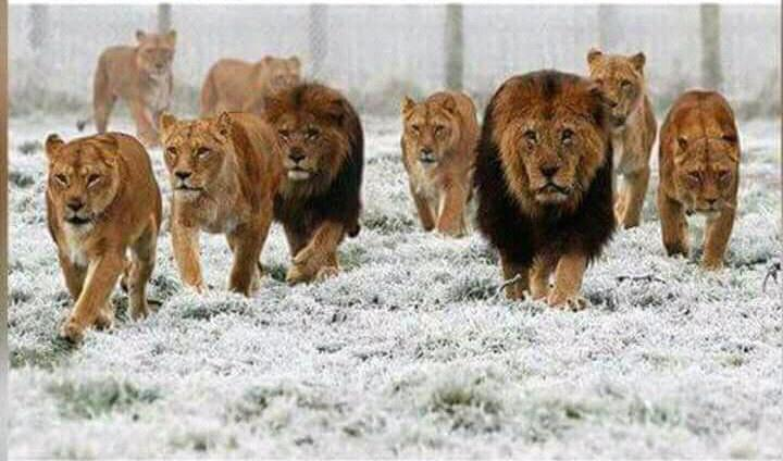 Surround yourself with those on the same mission as you. I sign out #goodnight_uot <br>http://pic.twitter.com/Tz2n7e2dr5