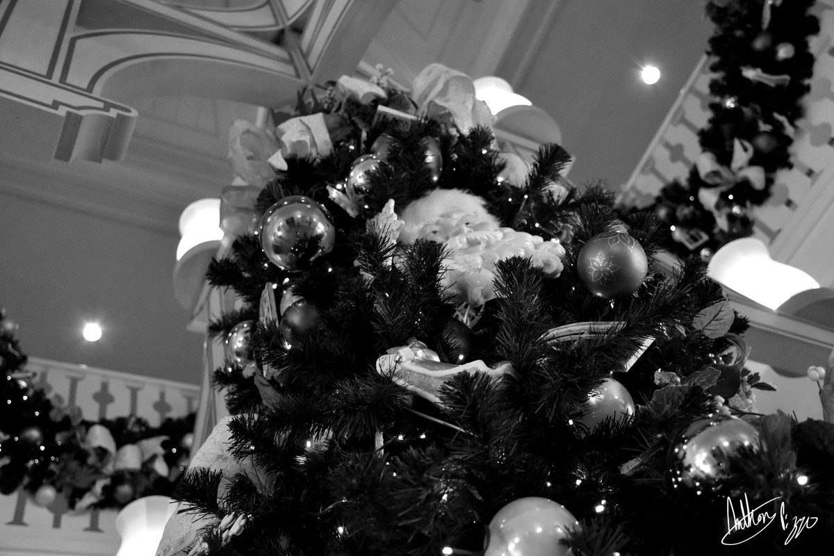 Low angle shot of the top of a Christmas tree
