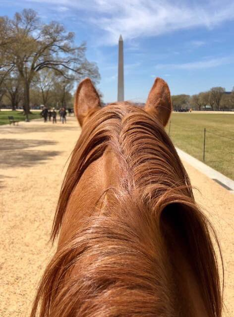 Always be yourself. Unless you can be a unicorn. Then always be a unicorn.⁣  ⁣ :  United States Park Police Mounted Police horse with a perfectly aligned view of the Washington Monument. /USPP ⁣ #FindYourPark<br>http://pic.twitter.com/lR82vgayAF