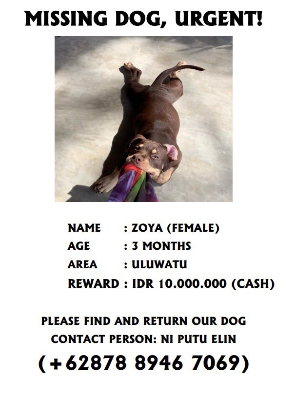 Please help re-share   Our company lost our dog.   Name : Zoja  Age : 5 months Breed: pitbull   Reward is 10 million idr.   She lost in uluwatu area since this morning. <br>http://pic.twitter.com/iLY6j8LIy7