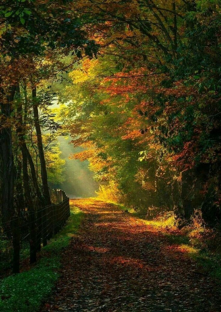 The forest makes your heart gentle, you become one with it. No place for greed or anger there!  ~Pha Pachak   #SaturdayMood <br>http://pic.twitter.com/JpCfMrXUA3
