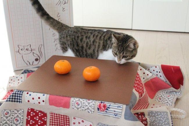 🐈🍊☃みかんを買うと猫用こたつが付いてくる 保護猫活動にも貢献できる「箱入りみかん」の予約受付中 -  @itm_nlabzoo