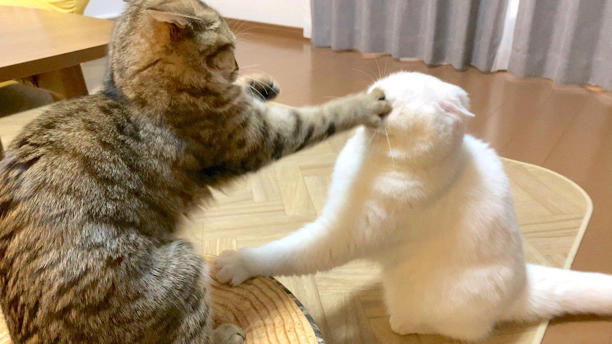 動画を投稿しました〜!今日はちょっとおもしろい喧嘩(?)のシーンです。このサムネのポムさんの顔すごいことになってますよね…!笑