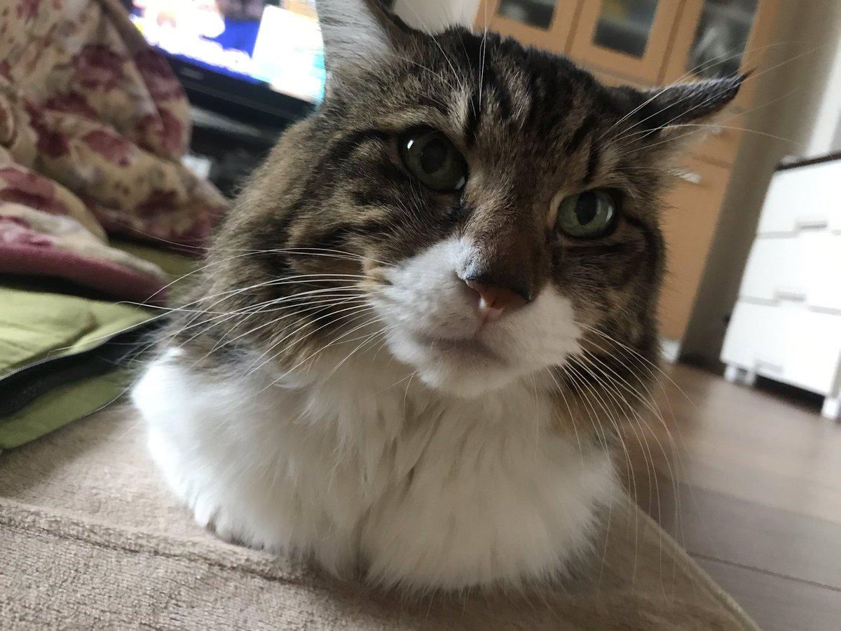 肩まで埋まった胸筋ムキムキの猫みたいになった