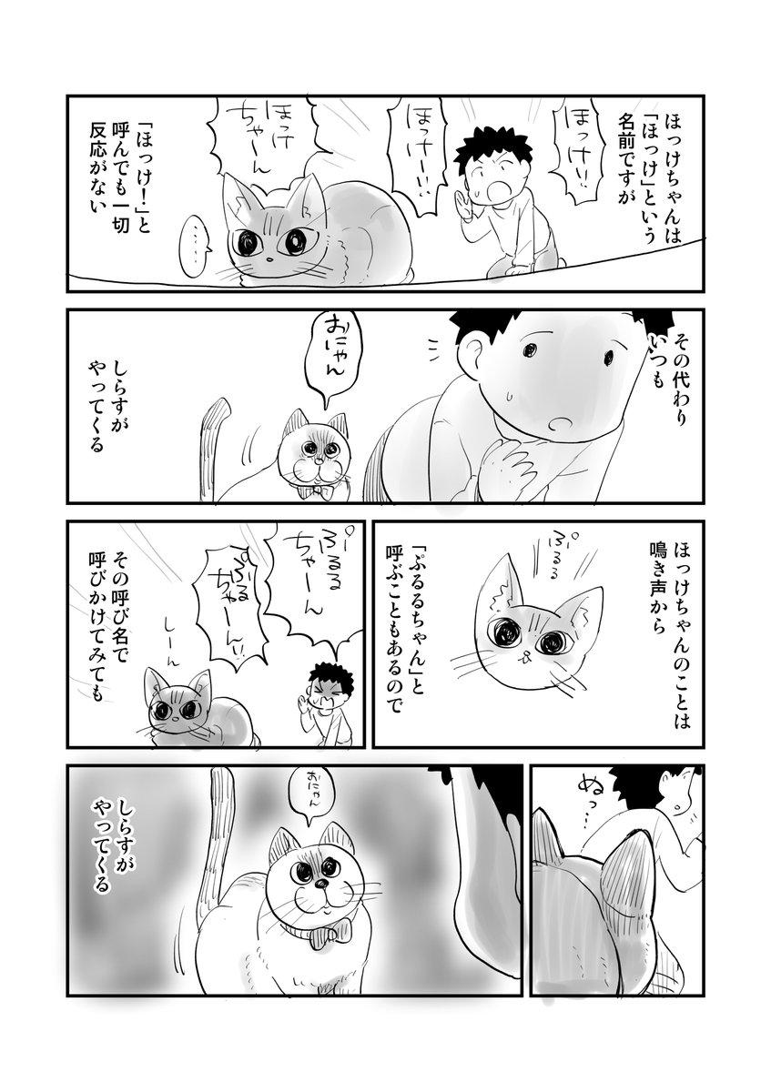 猫を飼った人しかわからない漫画