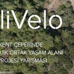 Image for the Tweet beginning: Yelki'de bisiklet ve zeytin rotasının