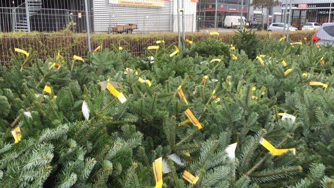 Sinterklaas is voorbij en dus is de jacht op de juiste kerstboom geopend. https://t.co/VpFnHfZ62k