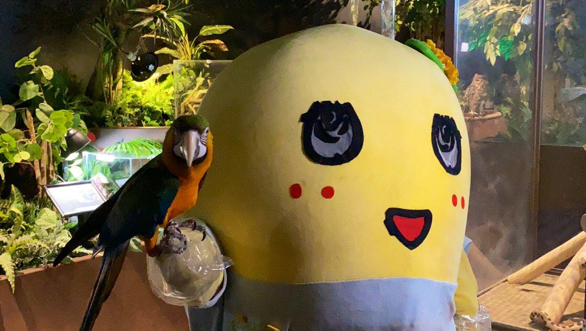 みんなー今日も一日お疲れ様なっしー♪ヾ(。゜▽゜)ノオウム慣れるとかわゆすなっしー♪コーディネート的にも凄くいい感じなっしー♪南の鳥は黄色を怖がらない説が出てきたなっしな♪明日は船橋の梨ミなっしー♪来られる方は気をつけて来てなっしー♪みんな元気に梨汁ブシャー:*もやおーむ