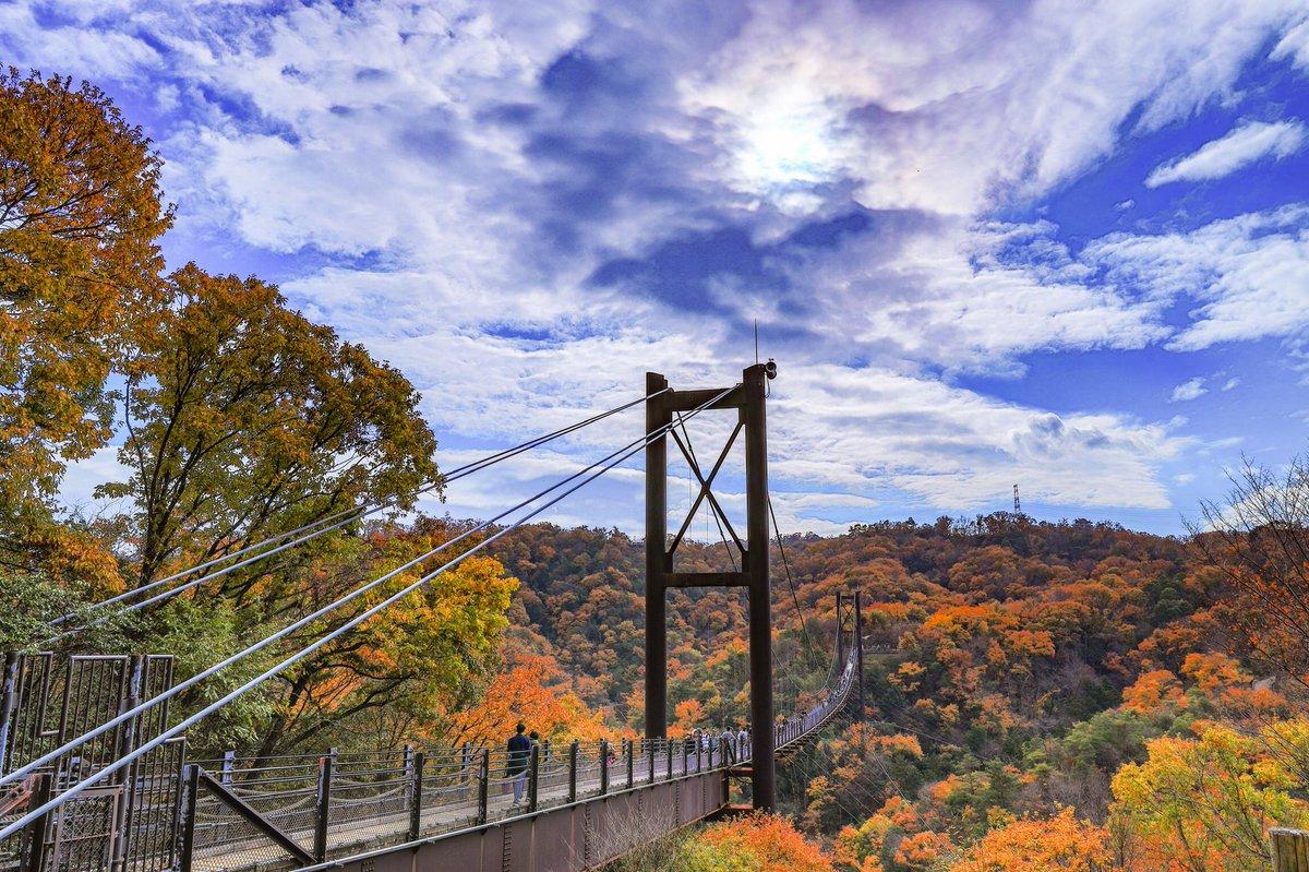市 吊り橋 交野