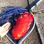 真っ赤なカラーの「ウミウシ」見た目がとにかく凄すぎる!