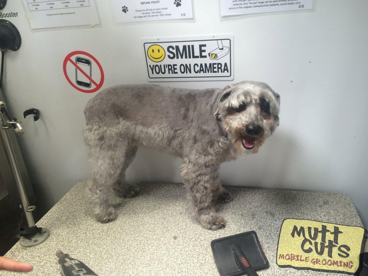 #petmobile #petgroomer #doglover #bayareadogs #grooming | http://www.muttcutsmobilegrooming.compic.twitter.com/8VmC3waBjh