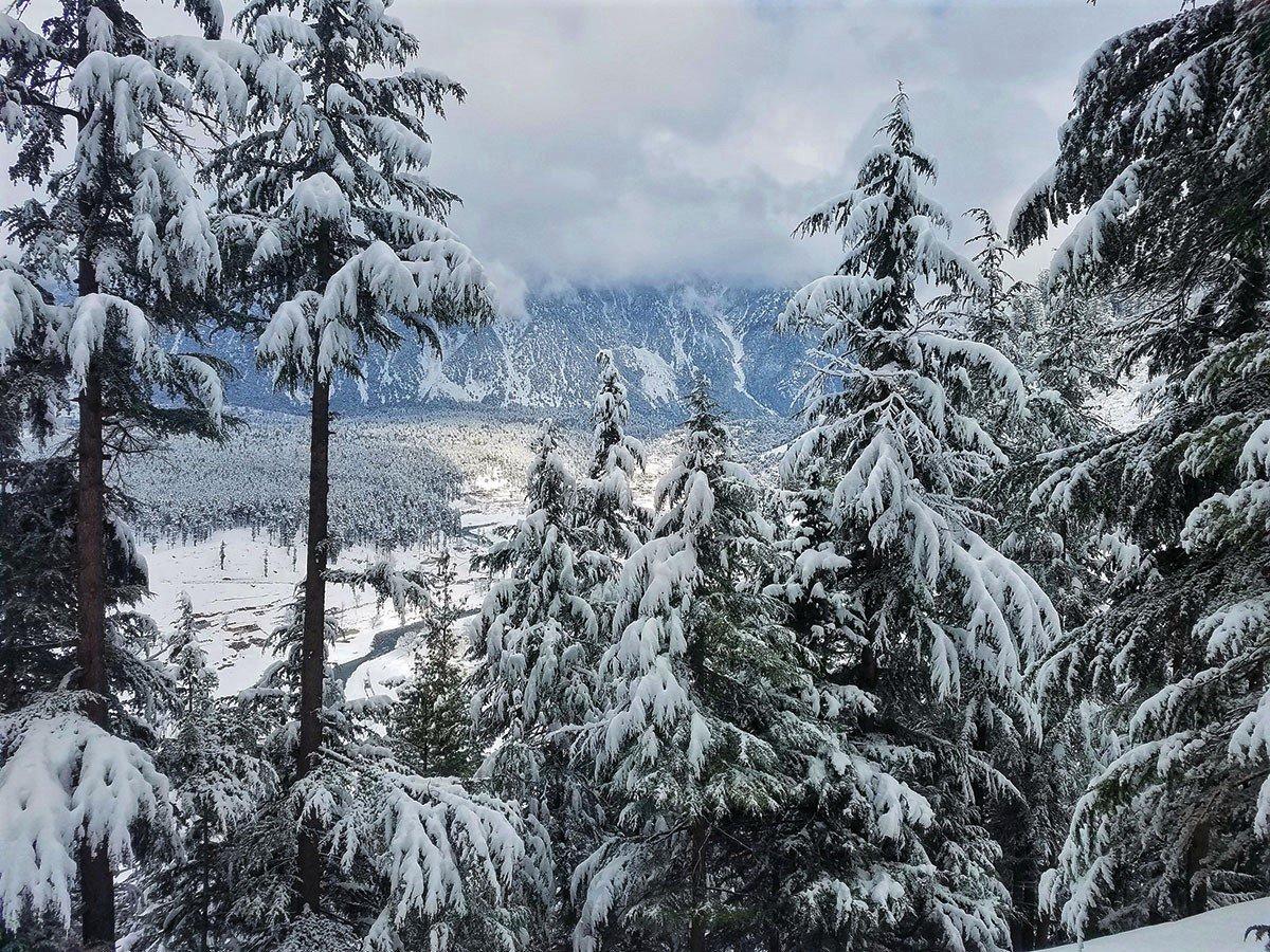 Winter Wilderness, Shangla  <br>http://pic.twitter.com/ALC0751ymB