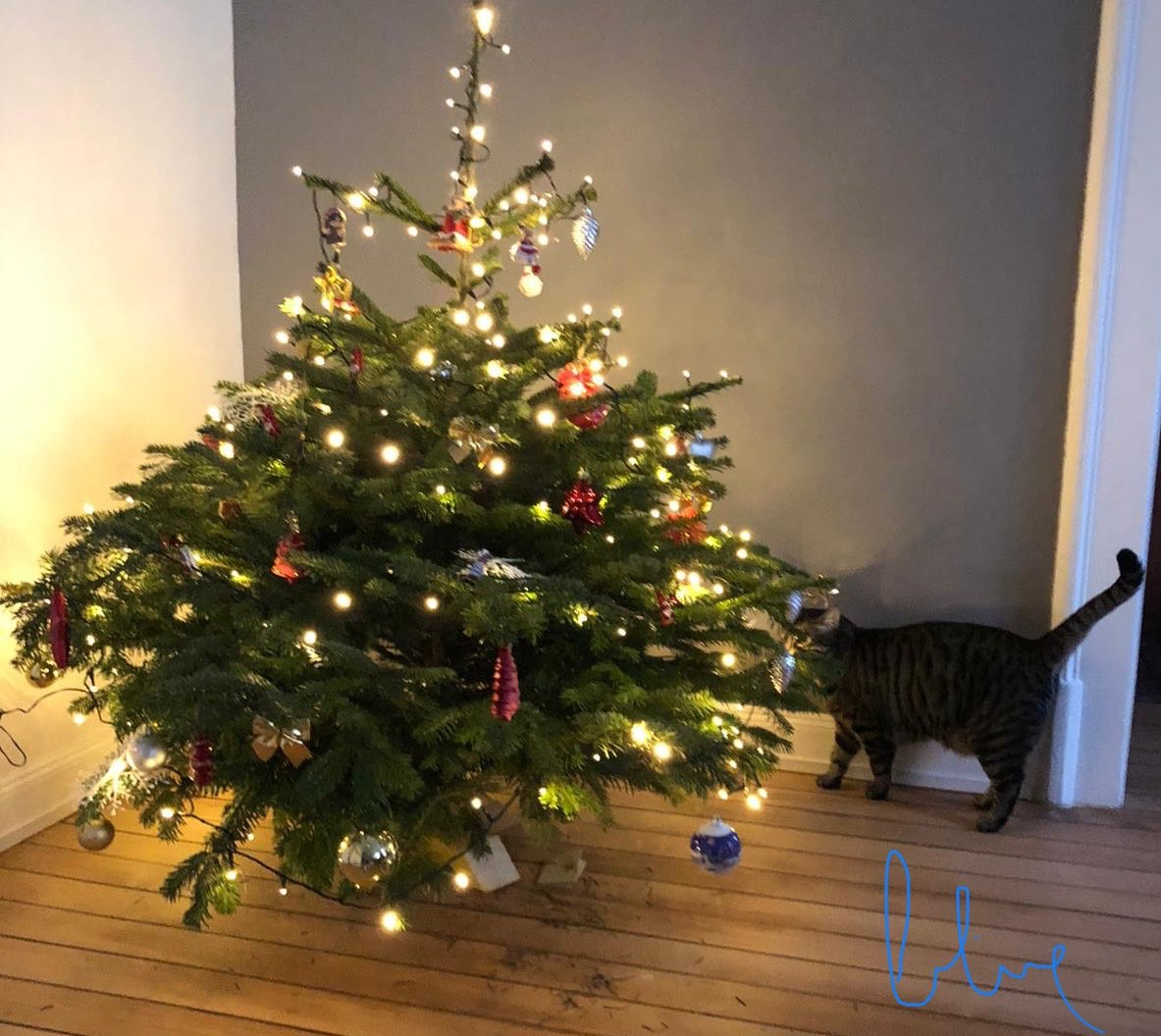 😹 Lets take a look 😻 ... well, today its ok, but tomorrow im not so sure 😂 (said the cat 🤣) ❄️ Hello Twitterland ❄️ Hoping that your Christmas trees are safe 😸 i wish you a perfect new week 💕 #Blue💙