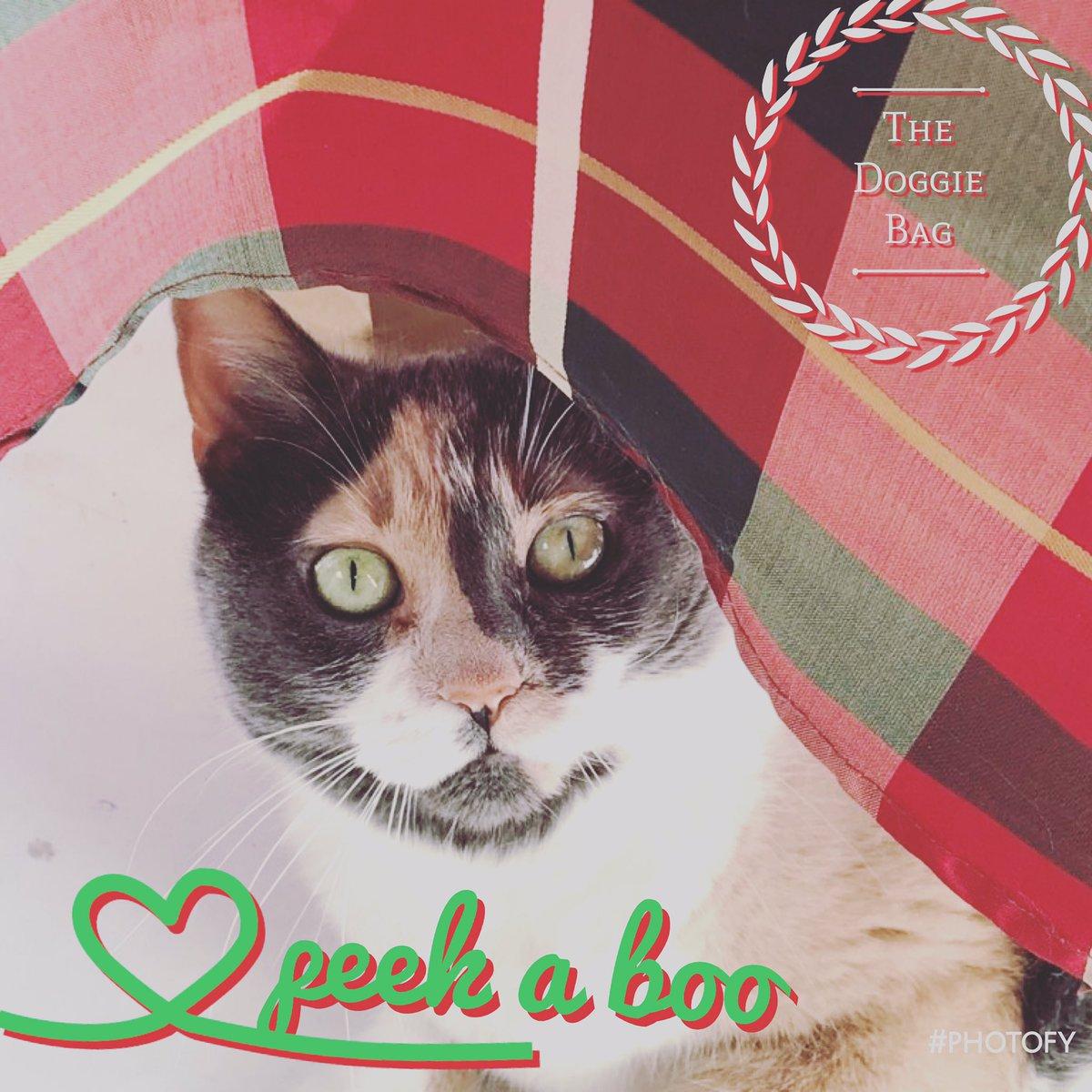 Love our Cookie!  #shopcat #shopcats #catsatwork #workingcat #calicocat #calicocatsrule #calicocatsofinstagram #calicocats #cats #catsrule #catlife #catlife #thedoggiebag #catlover #petboutique #catlovers #catloversclub #lakelandflorida #lakelandflpic.twitter.com/5WvZqhSBUd