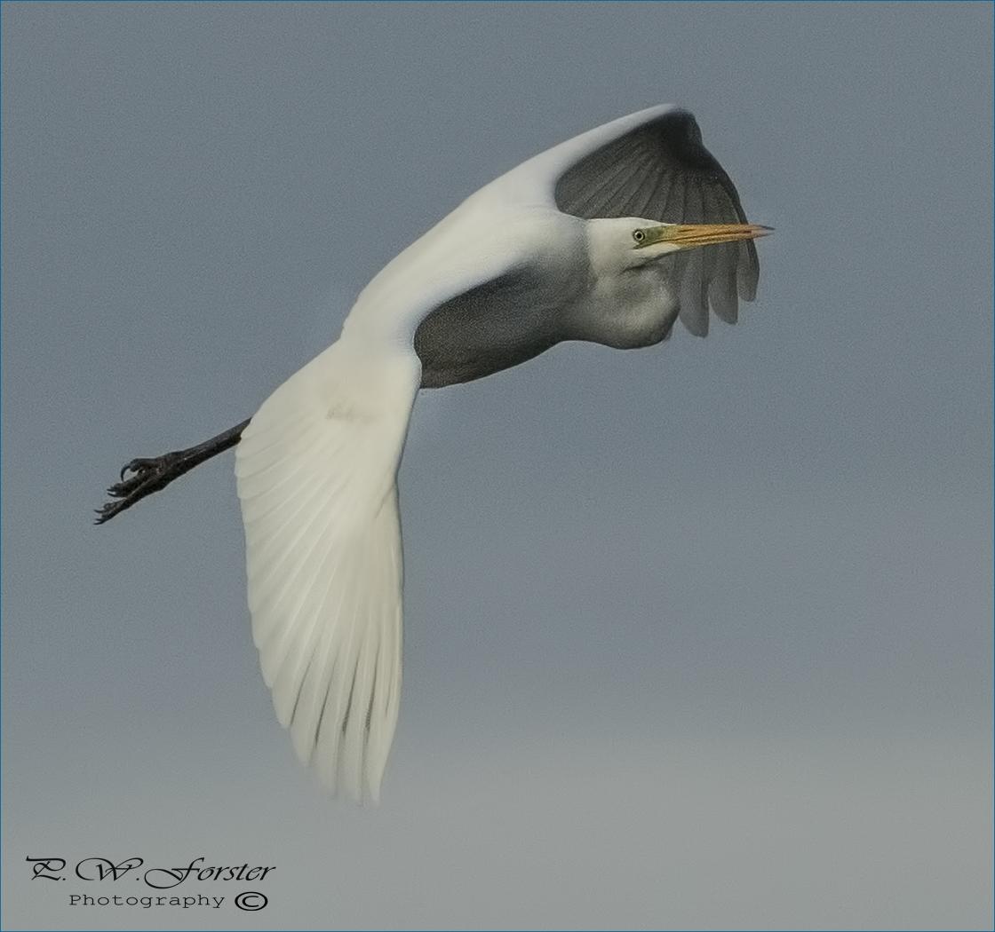 Few More From Hardwick hall @teesbirds1 @DurhamBirdClub @Birds_UK @WildlifeMag @Natures_Voice @RSPBEngland @teeswildlife @DurhamBirdClub @CountryfileMag @WhitbyNats  @_BTO @HardwickHHotel<br>http://pic.twitter.com/IXPZeN2zs0