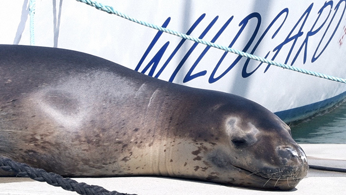 Auckland harbour's cheeky leopard seal gets her own film alongside four other tales as part of @ChillboxNZ's doco series #ChillDocs.    Watch 'em all here: https://t.co/OyNvFaSH1C https://t.co/W6wn4E476a