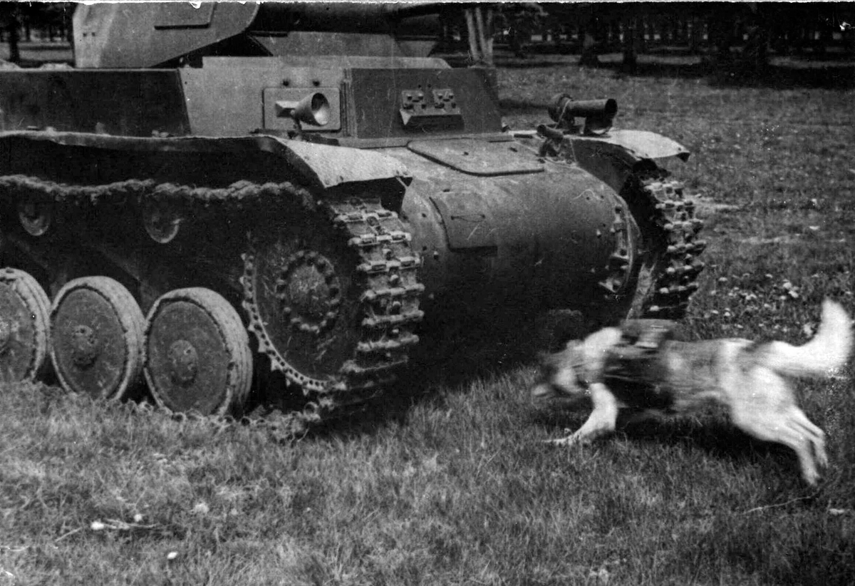 """Tank Archives on Twitter: """"The theory that Soviet anti-tank dogs ..."""