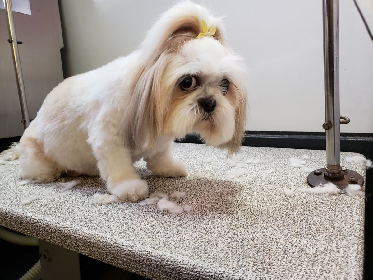 #petlovers #bayareadogs #lovepets #petgrooming #mobilegrooming | http://www.outletpetgrooming.compic.twitter.com/st9BDymLtV