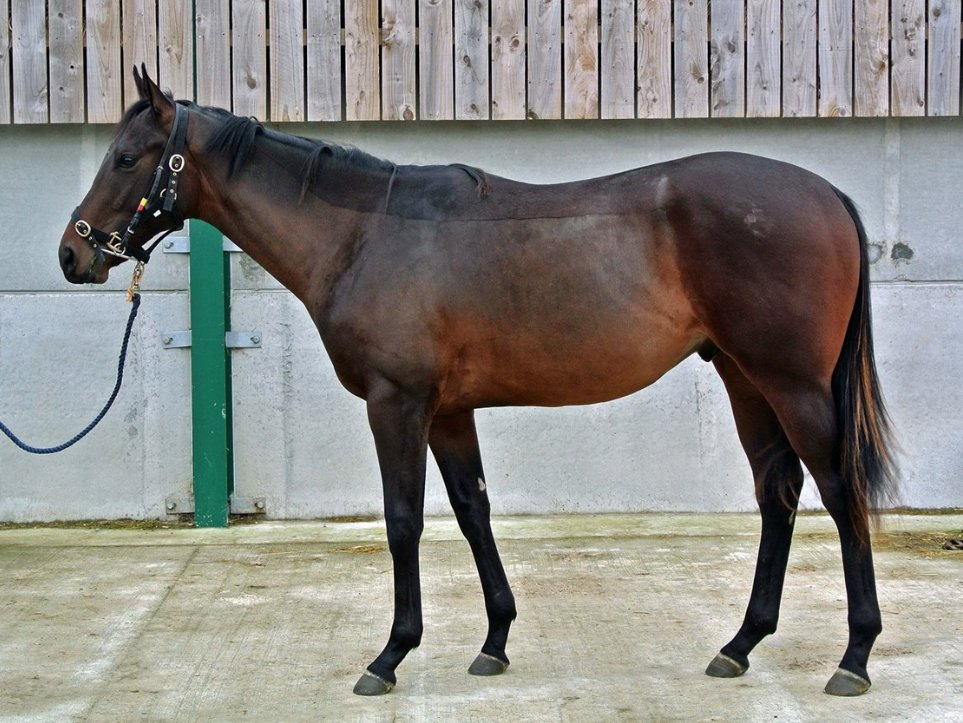 Backed and ridden-away in just over a week, this well-bred unnamed Colt by Zoffany is a quick learner and is proving straightforward. Just four 6.5% Shares remain available. Find out more here: https://t.co/FtxYbaglW8