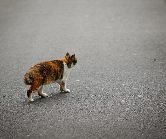 無題#街歩き#scene#ねこ #ネコ #猫 #cat #ぬこ #めこ #ねこさん#路傍 #roadside#sony #sonynex #nex6 #e_mount#nikonf_mount #f_nexadapter#nikon #ais #aisnikkor #aisnikkor10525#singlefocuslens #mflens #oldlens https://ift.tt/2PtAAKN